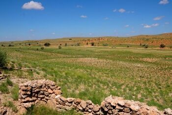 Nossob River course, Kgalagadi Transfrontier Park, Northern Cape
