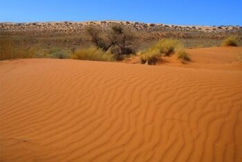 Dunes Kalahari Desert, Northern Cape